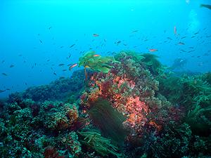 Monte submarino